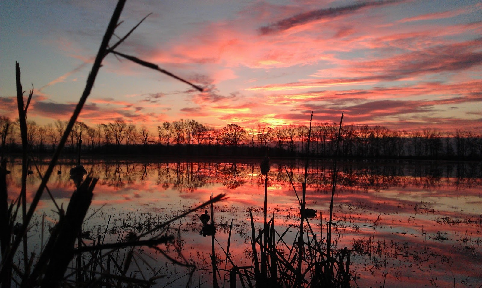 home duck hunting new mexico sport and recreation